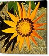 Orange Blossom Malaga Spain Canvas Print