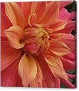 Orange Blossom Special Canvas Print