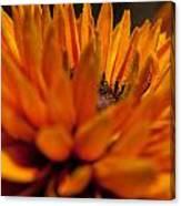 Orange Burst Canvas Print