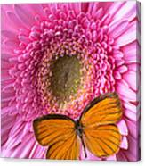 Orange Butterfly On Pink Daisy Canvas Print