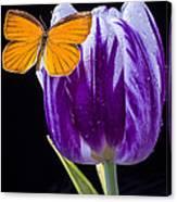 Orange Butterfly On Purple Tulip Canvas Print