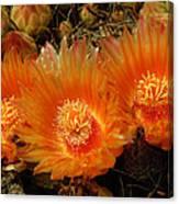 Orange Cactus Canvas Print