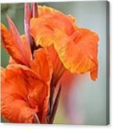 Orange Cana Canvas Print