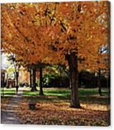 Orange Canopy - Davidson College Canvas Print