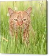 Orange Cat In Green Grass Canvas Print