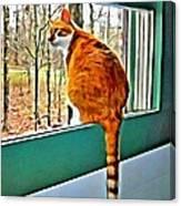 Orange Cat In Window Canvas Print
