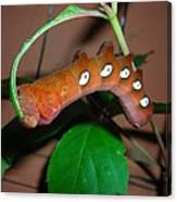 Orange Caterpillar Canvas Print