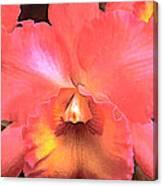 Orange Cattleya Orchid Canvas Print