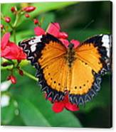 Orange Common Lacewing Butterfly Canvas Print