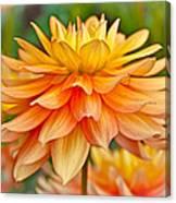 Orange Cream Dahlia Canvas Print