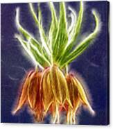 Orange Crown Imperial Flowers Fritillaria Imperialis Canvas Print
