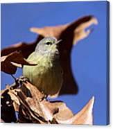 Orange-crowned Warbler - Feather Lite Canvas Print