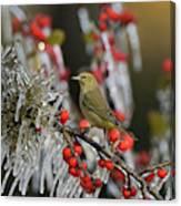 Orange-crowned Warbler (vermivora Celata Canvas Print