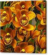 Orange Cymbidium Canvas Print