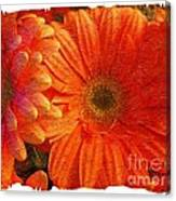 Orange Daisies Painterly With Border Canvas Print