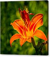 Orange Daylily Flower 3 Canvas Print