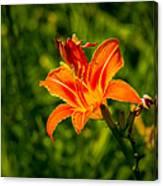 Orange Daylily Flower 4 Canvas Print