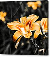 Orange Daylily Flowers On Gray 1 Canvas Print