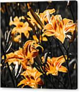 Orange Daylily Flowers On Gray 5 Canvas Print