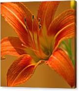 Orange Daylily Canvas Print