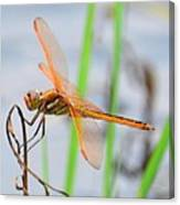 Orange Dragonfly On The Water's Edge Canvas Print