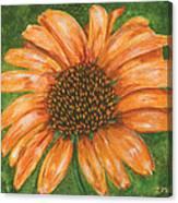 Orange Echinacea Canvas Print