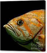 Orange Fish Canvas Print