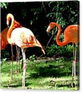 Orange Flamingo Canvas Print
