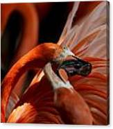 Orange Flamingos Conflict Resolution Canvas Print