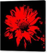 Orange Flower Burst  Canvas Print