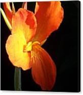 Orange Flower Canna Canvas Print