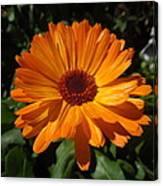 Orange Flower In The Garden Canvas Print