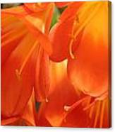 Orange Flower Petals Canvas Print