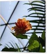 Orange Flower Canvas Print