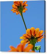 Orange Flowers On Blue Sky Canvas Print