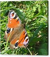 Orange Flutter Canvas Print