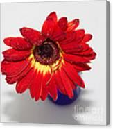 Orange Gerber Daisy In Blue Vase Photograph by Anita Miller