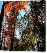 Orange Glowing Tree Canvas Print