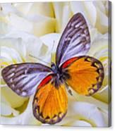Orange Gray Butterfly Canvas Print