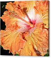 Orange Hibiscus After The Rain Canvas Print