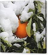 Orange In Snow Canvas Print