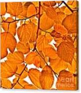 Orange Leaves Canvas Print