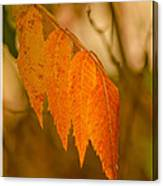 Orange Leaves Of Fall Canvas Print
