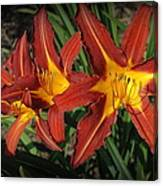 Orange Lillies Canvas Print