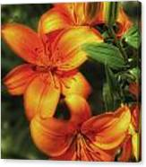 Orange Lillies Canvas Print