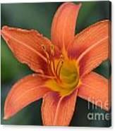 Orange Lily Photo 6 Canvas Print