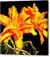 Orange Lily Twins Canvas Print