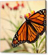 Orange Mariposa Canvas Print