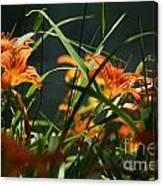 Orange Natural Beauty...   # Canvas Print
