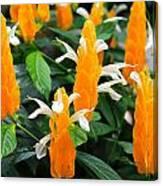 Orange Of Flowers Canvas Print
